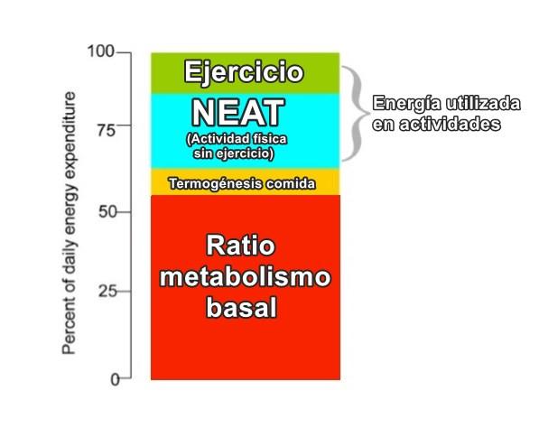 Componentes-del-balance-energético