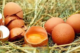 El huevo la proteína ideal